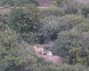 DSC03042rev lion 1400_1120.jpg